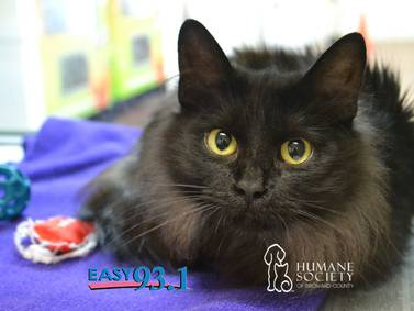 EASY's Pet of the Week: AMY