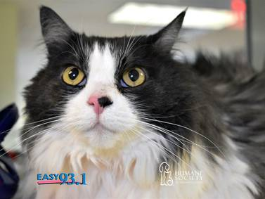 EASY's Pet of the Week: SWEETY BOO